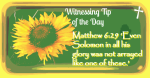 witnessing-tip-of-the-day-11917-0